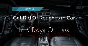 How To get rich of roaches in car